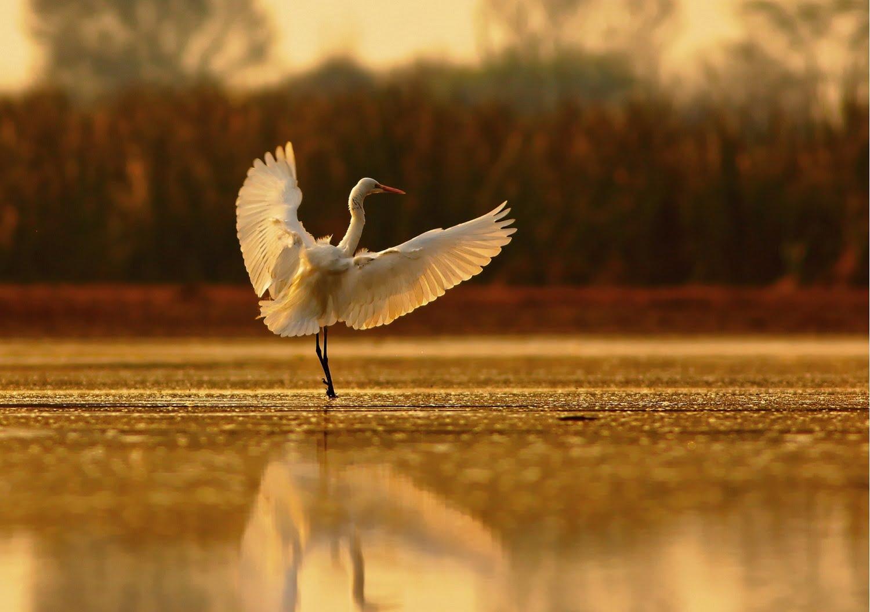 egret on horseshoe island