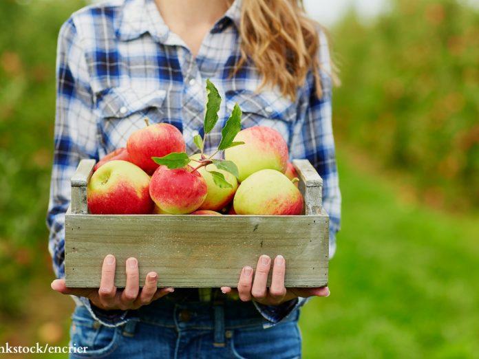 Door County Apple Orchards