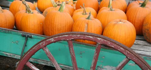 Pumpkins For Sale on Old Wagon